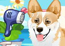 Cute Corgi Care